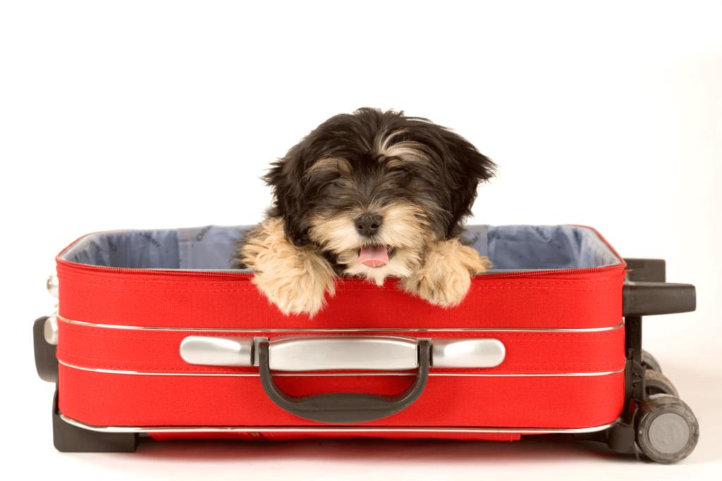 pet-travel-image00