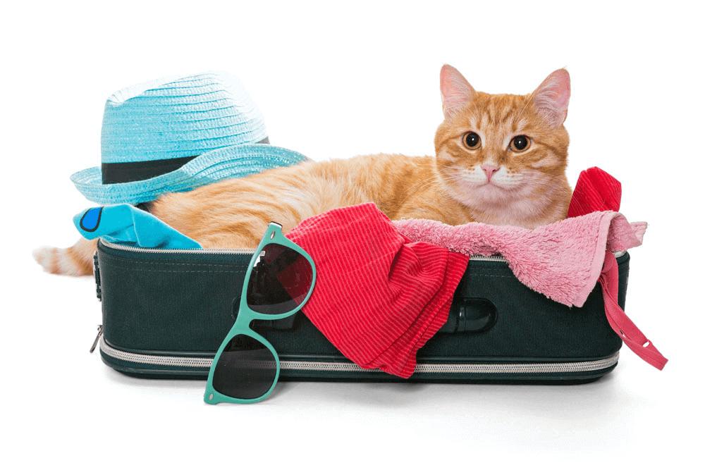 pet-travel-image01