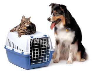 pet-travel-image02