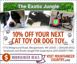 The Exotic Jungle